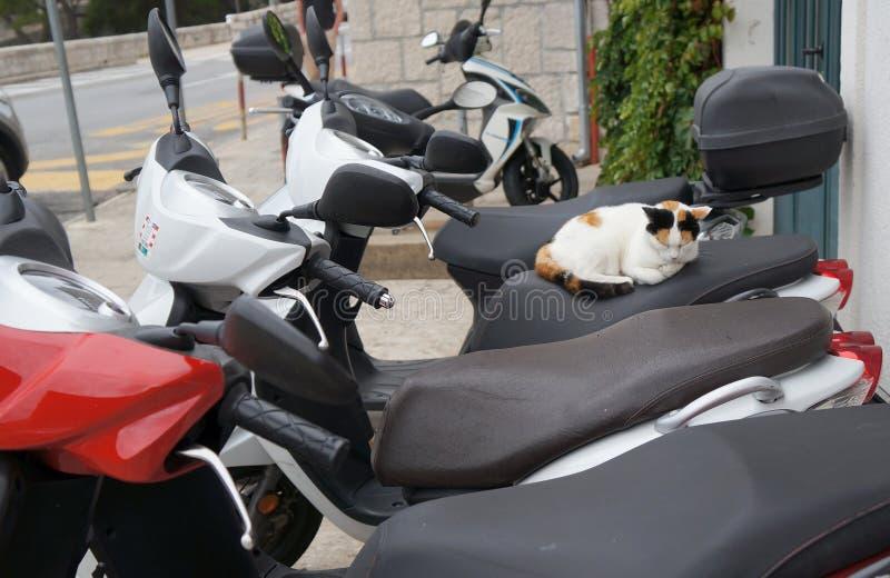 El dormir hermoso del gato callejero imagen de archivo libre de regalías