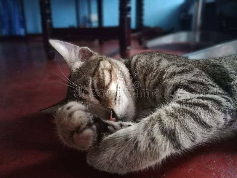 El dormir Kitty imagenes de archivo