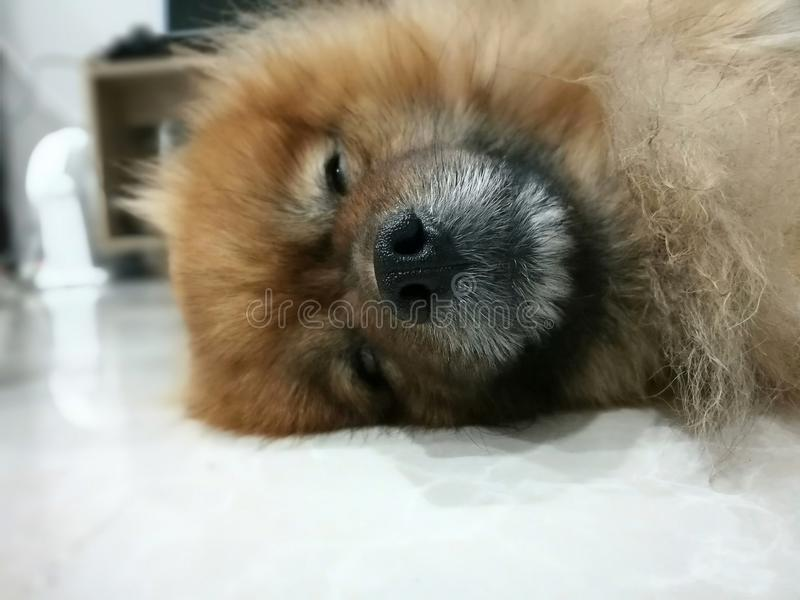 El dormir lindo del perro fotografía de archivo libre de regalías
