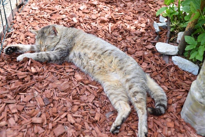 El dormir perezoso del gato nacional en el garten imágenes de archivo libres de regalías