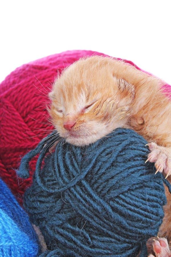 El dormir recién nacido del gato del bebé Gatito anaranjado viejo del color crema de los pequeños pocos días hermosos lindos imagen de archivo libre de regalías