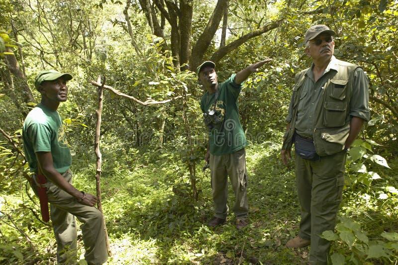 El Dr. Karmari, un veterinario y grupo que trabajan en campo snaring para encontrar trampas el capturar de animales en el parque  imágenes de archivo libres de regalías
