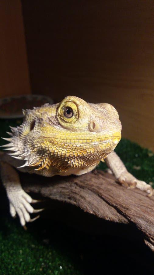 El dragón imagen de archivo