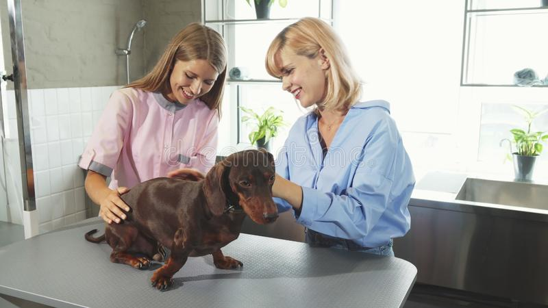 El dueño llevó el perro la oficina de los veterinarios fotografía de archivo libre de regalías