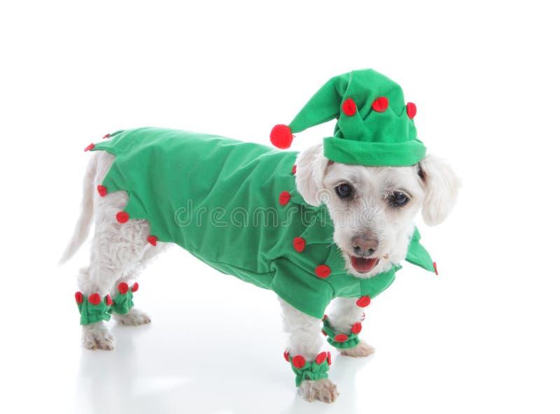 El duende o un bufón de Papá Noel en traje y sombrero verdes imagenes de archivo