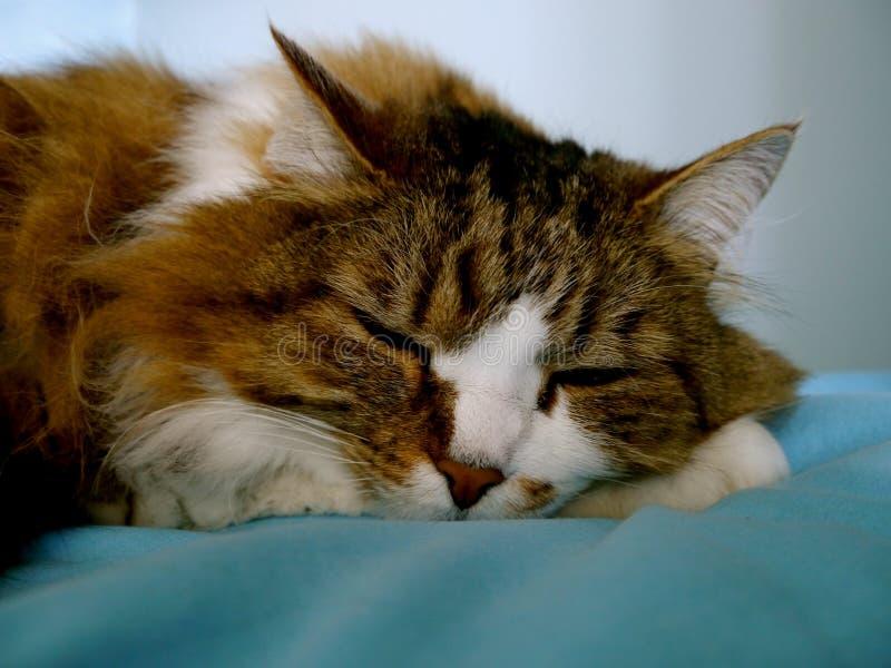 El durmiente fotografía de archivo