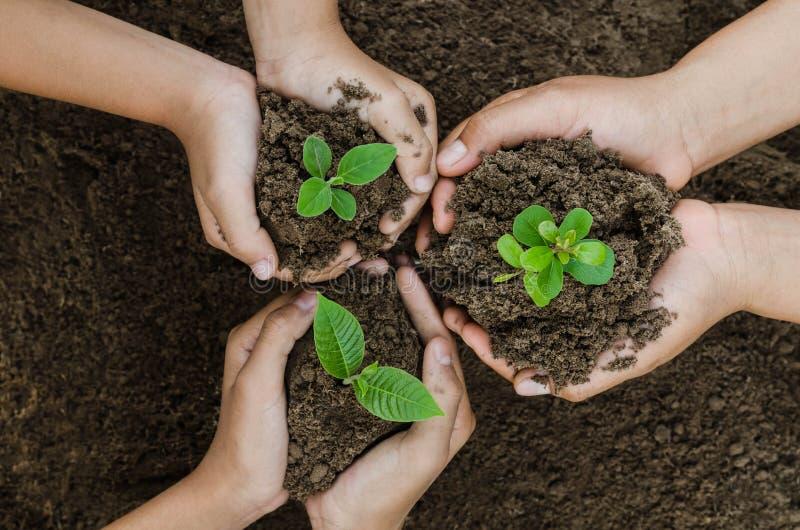 El eco creciente del concepto agrupa a los niños de la mano que plantan junto imágenes de archivo libres de regalías