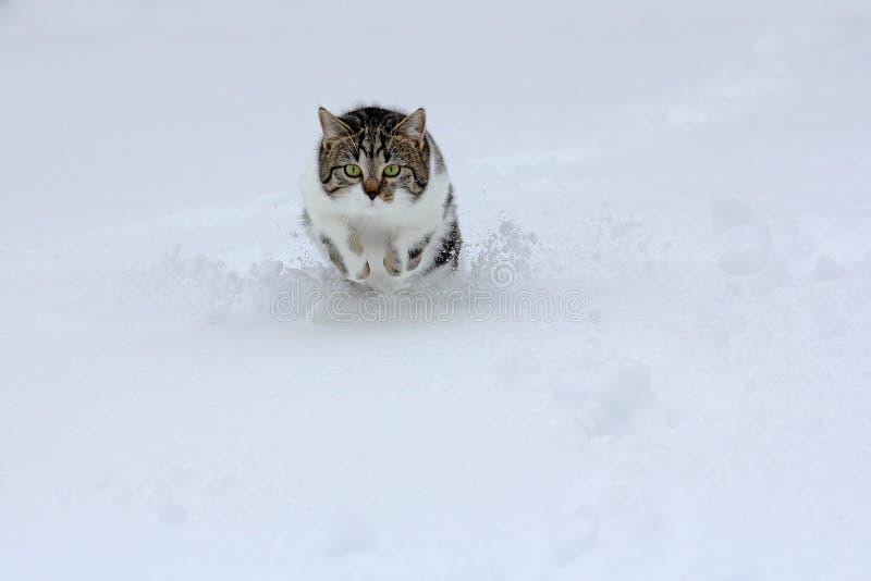El ejecutarse en la nieve da placer fotos de archivo