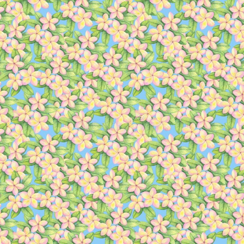 El ejemplo del modelo de la acuarela, flores tropicales, plumeria rosado y amarillo, se va libre illustration