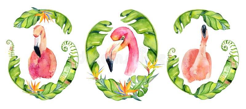 El ejemplo dibujado mano rosada de la acuarela del flamenco en el arreglo con las plantas tropicales verdes, monstera exótico y e ilustración del vector