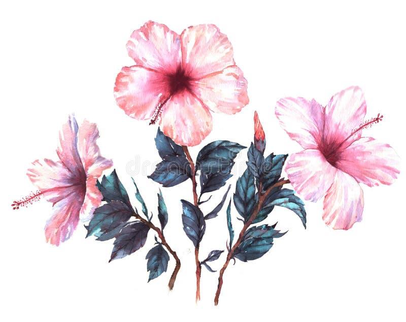 El ejemplo floral de la acuarela a mano de la composición blanda con blanco con el hibisco rosado florece ilustración del vector