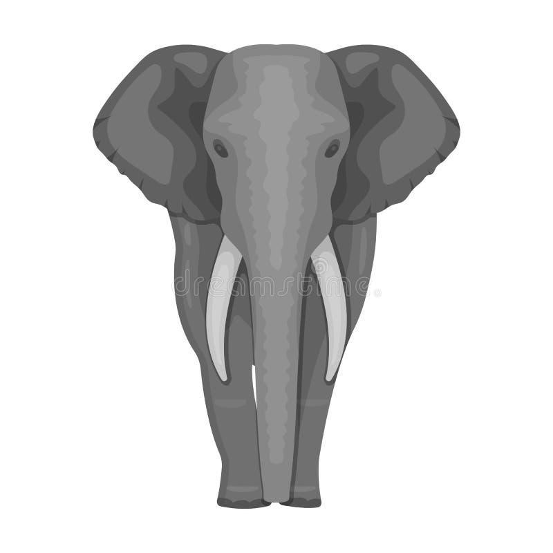 El elefante, el animal salvaje más grande El elefante africano con los colmillos escoge el icono en la acción monocromática del s libre illustration