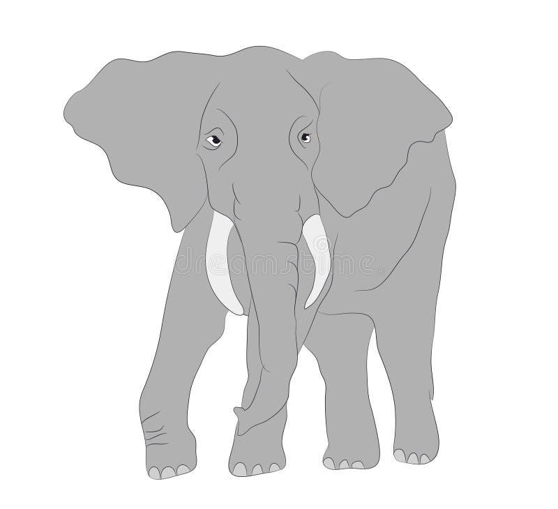 El elefante gris camina vector, fondo blanco ilustración del vector