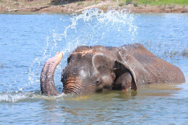 El elefante juega el agua fotos de archivo