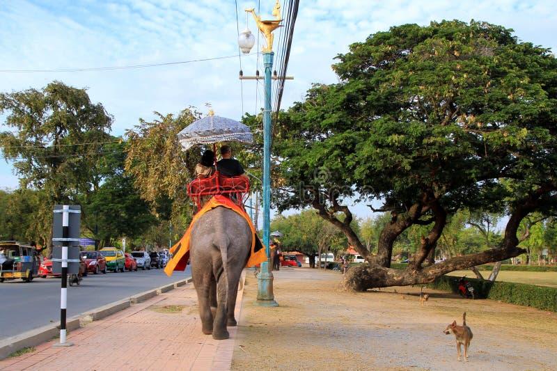 El elefante y el perro en el paseo fotos de archivo