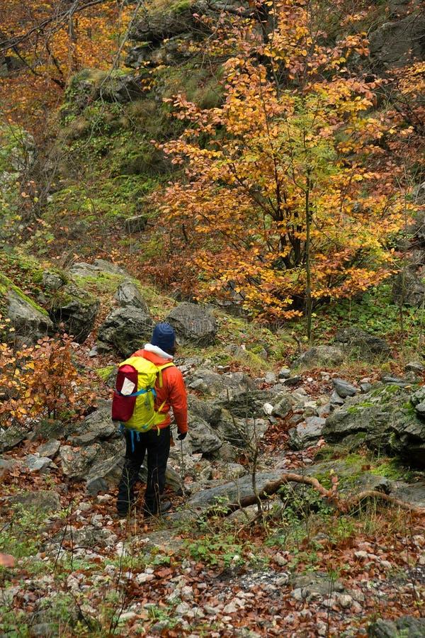 El emigrar en las montañas de Mehedinti en otoño foto de archivo libre de regalías