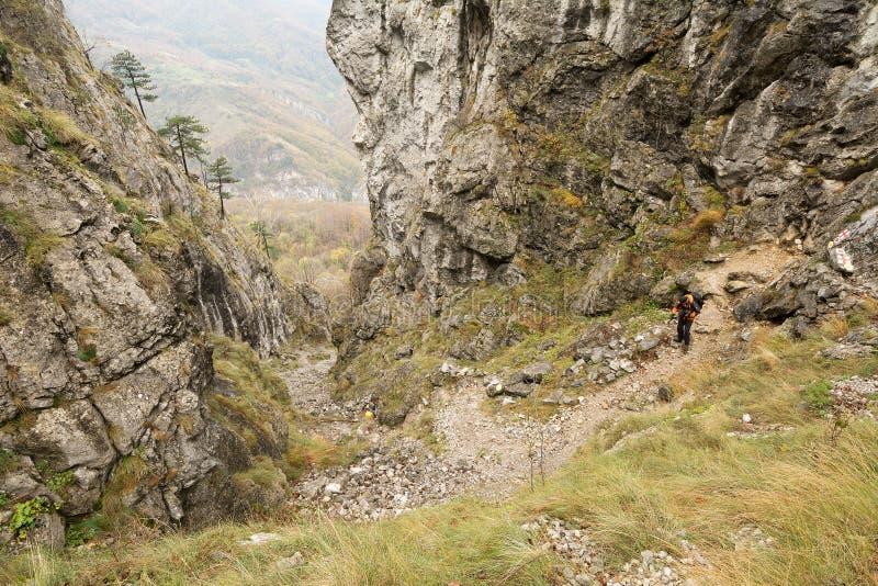 El emigrar en las montañas de Mehedinti en otoño imagen de archivo