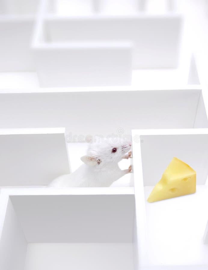 El encontrar del queso   fotografía de archivo