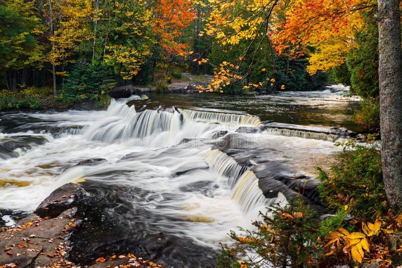 El enlace de la parte superior cae en el otoño fotografía de archivo libre de regalías