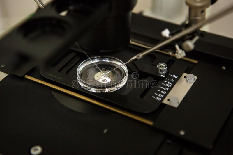 El equipo en el laboratorio de la clínica de la fertilización in vitro IVF foto de archivo libre de regalías