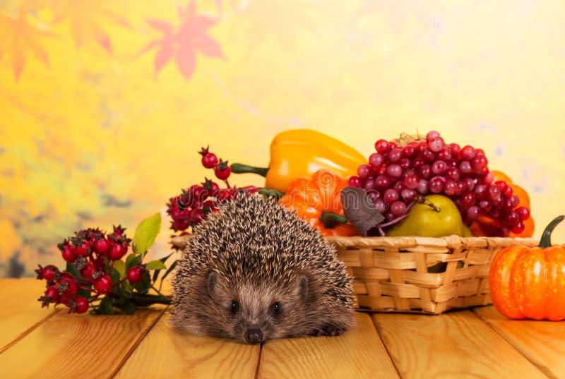 El erizo gris divertido se sienta en la tabla de madera, al lado de la cesta de frutas y verduras imágenes de archivo libres de regalías
