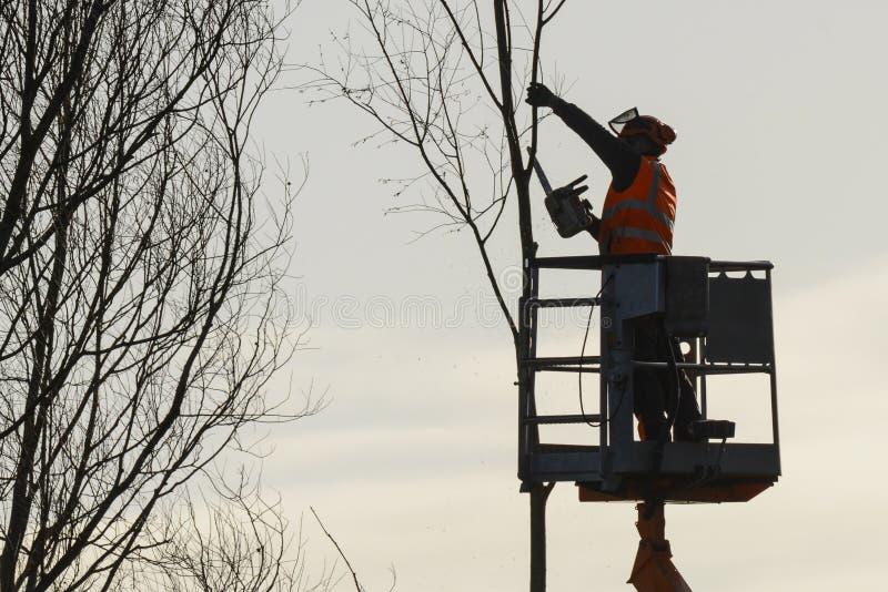 El escalador del árbol con vio y el arnés, leñador en el trabajo imagenes de archivo