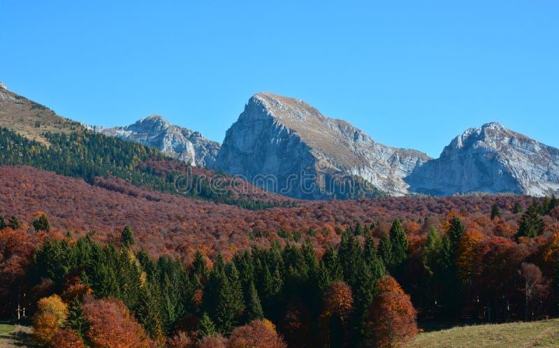 el espectáculo hermoso de la naturaleza del otoño imágenes de archivo libres de regalías