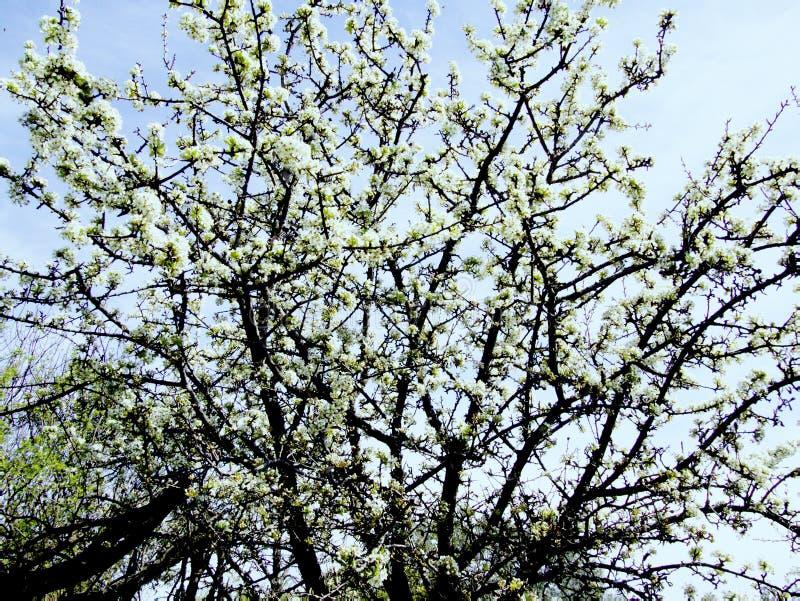 El esplendor y el aroma de jardines florecientes imagenes de archivo