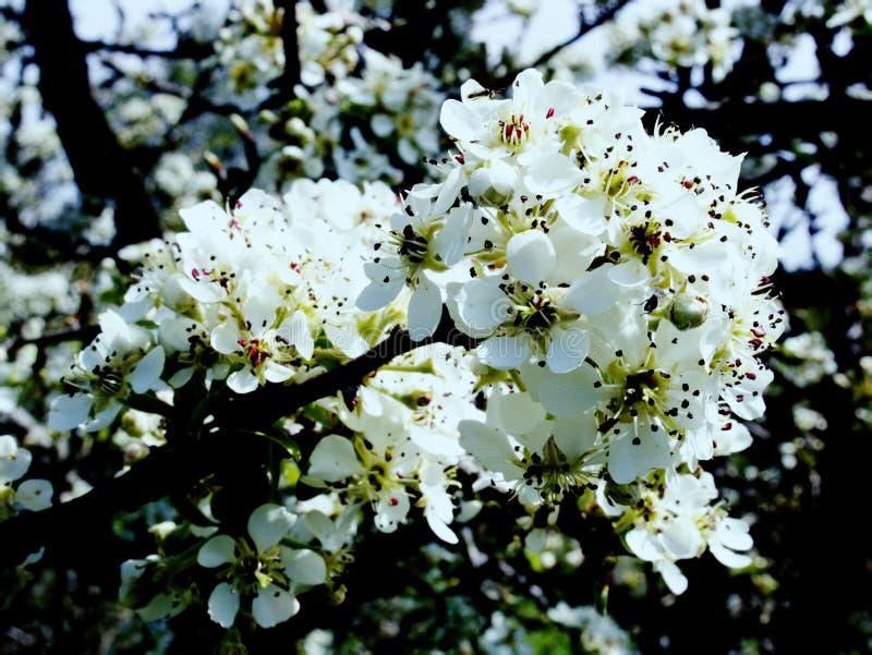 El esplendor y el aroma de jardines florecientes fotografía de archivo