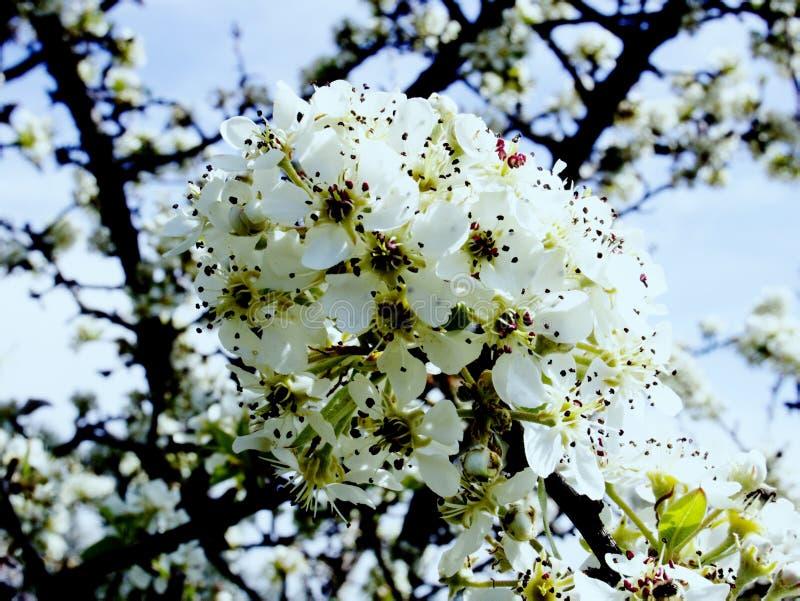 El esplendor y el aroma de jardines florecientes imagen de archivo libre de regalías