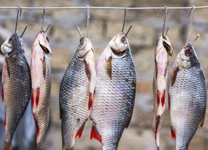 El espolón salado de los pescados está colgando en el alambre y secado al aire libre fotos de archivo