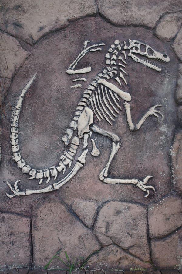 El esqueleto de un dinosaurio fotografía de archivo