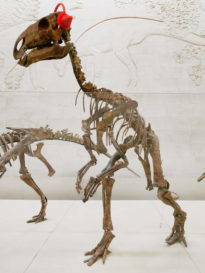 El esqueleto del dinosaurio vertical en museo de la paleontología imagen de archivo