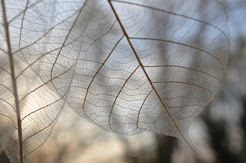 El esqueleto sale del cielo de filtración del otoño y los árboles ajardinan foto de archivo