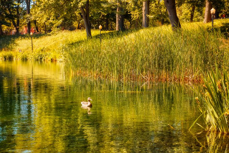 El estanque, la hierba verde y los árboles en el parque de La Fontaine de Montreal, Canadá imagenes de archivo