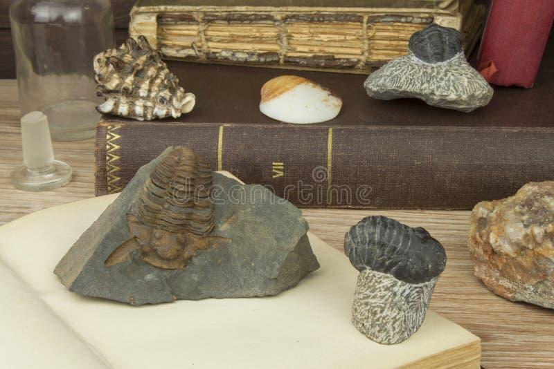 El estudio de la paleontología en la universidad Preparación para un examen importante imagenes de archivo