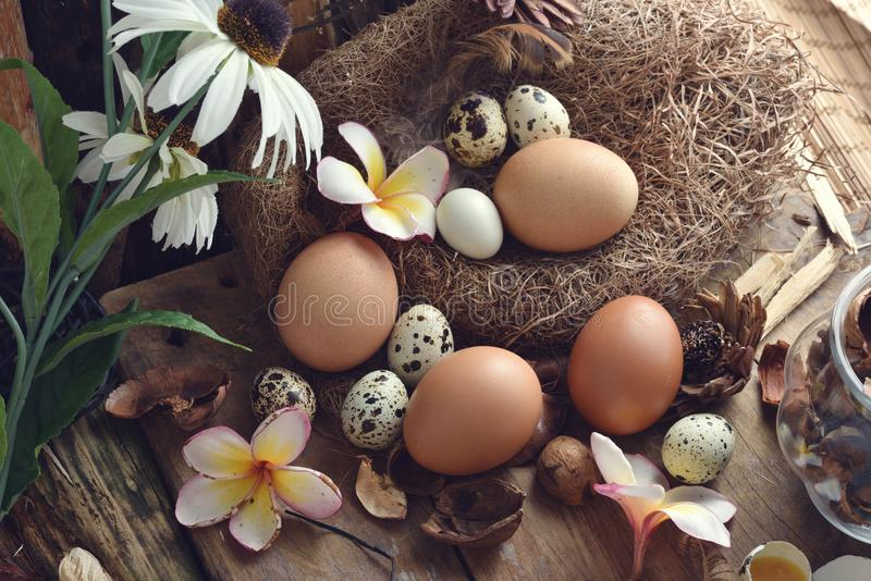 El estudio tiró de los huevos de codornices en un fondo de madera del vintage foto de archivo
