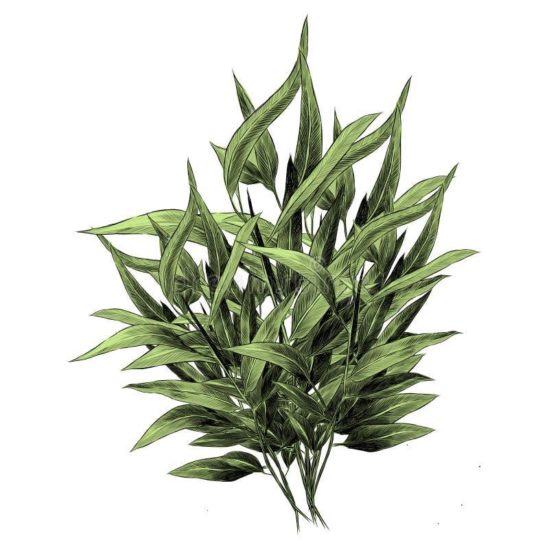 El eucalipto sale de gráficos de vector del bosquejo stock de ilustración