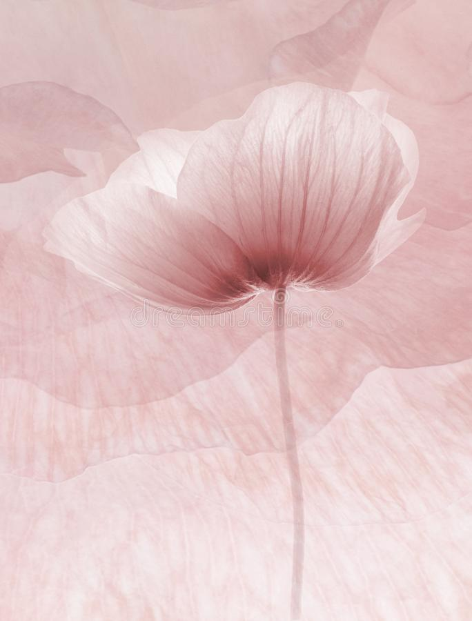 El extracto florece el fondo fotografía de archivo