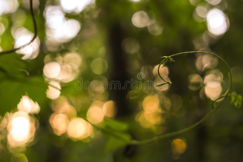 El extracto verde y amarillo empañó el fondo con la planta y el bokeh hermoso en luz del sol Imagen macra con el pequeño departam fotografía de archivo libre de regalías