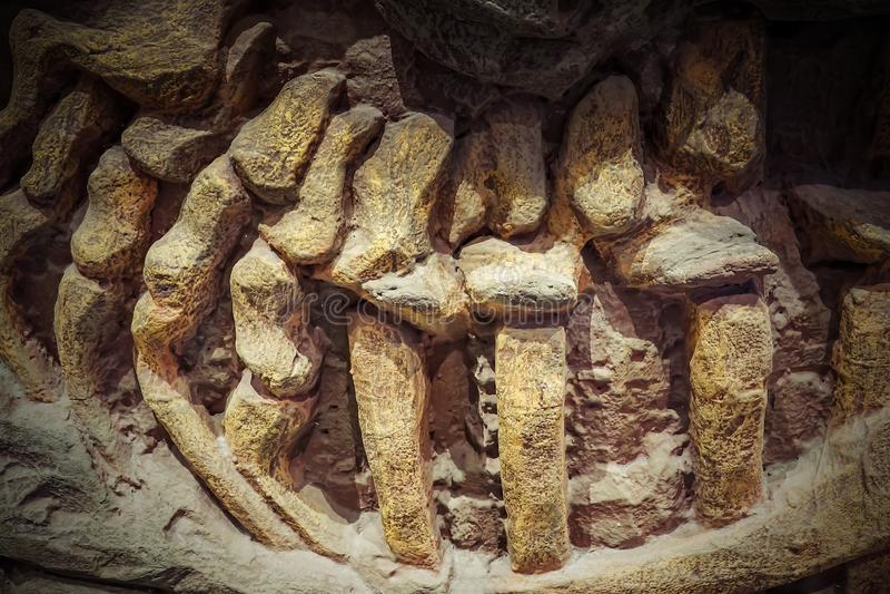 El fósil modelo de Dinosaur, dinosaurios es un grupo diverso de reptiles del clade Dinosauria fotografía de archivo libre de regalías