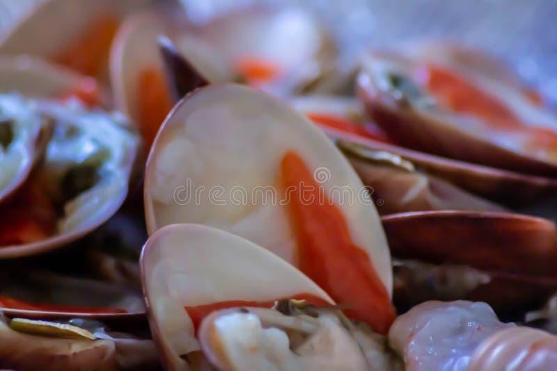 El fasolaro, también llamó el chione de Callista del fasolara es un molusco bivalvo de la familia del Veneridae foto de archivo libre de regalías