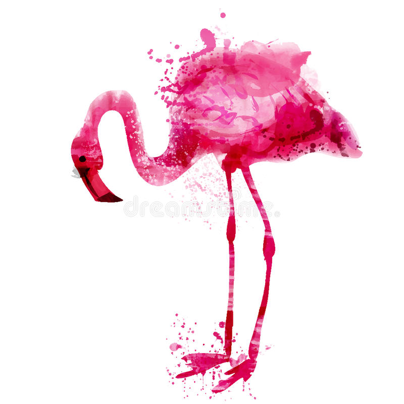 El flamenco del rosa de la acuarela del vector adentro salpica stock de ilustración