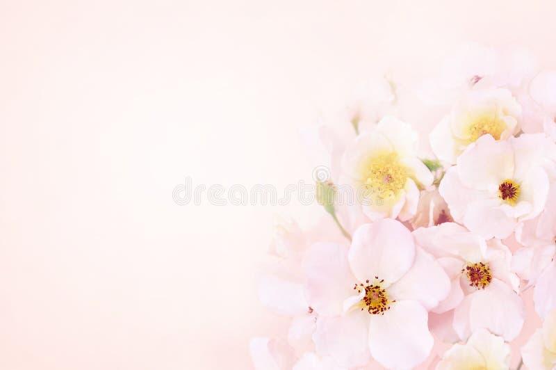 El flor de la primavera o la floración del verano subió escaramujo stock de ilustración