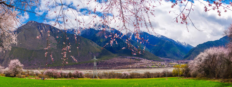El flor del melocotón y la cebada de la montaña colocan en pueblo tibetano fotografía de archivo