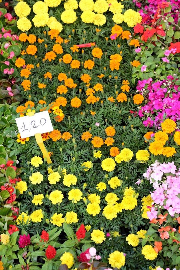 El florista vende las flores muy coloridas foto de archivo libre de regalías