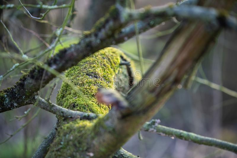 El foco principal está en árboles en diversas situaciones foto de archivo