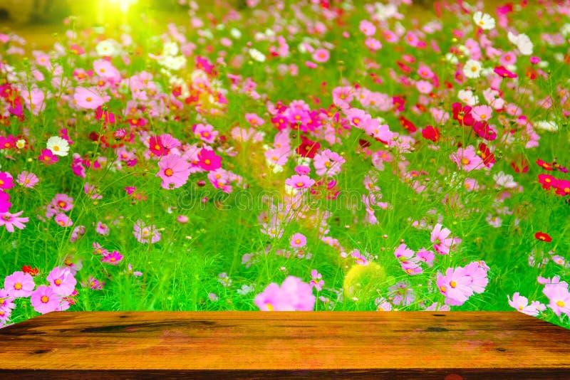 El foco selectivo y el foco suave del cosmos cultivan un huerto con la tabla de madera en día soleado caliente imagen de archivo libre de regalías