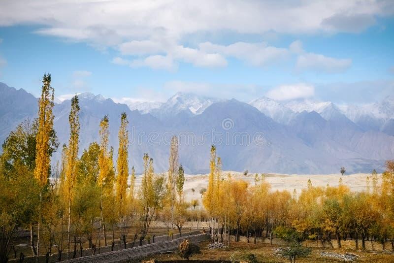 El follaje colorido en otoño contra el desierto y la nieve de Katpana capsuló la cordillera de Karakoram foto de archivo