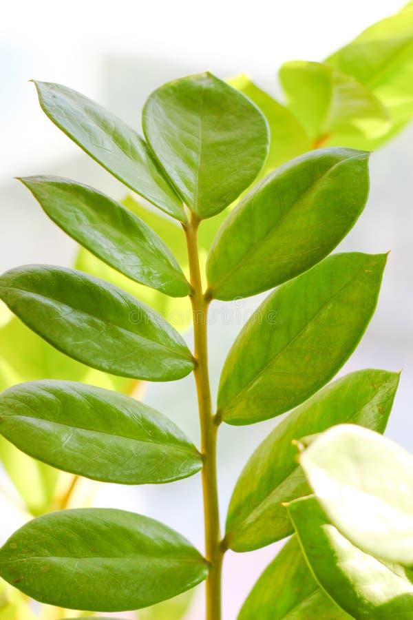 El follaje del árbol imagen de archivo